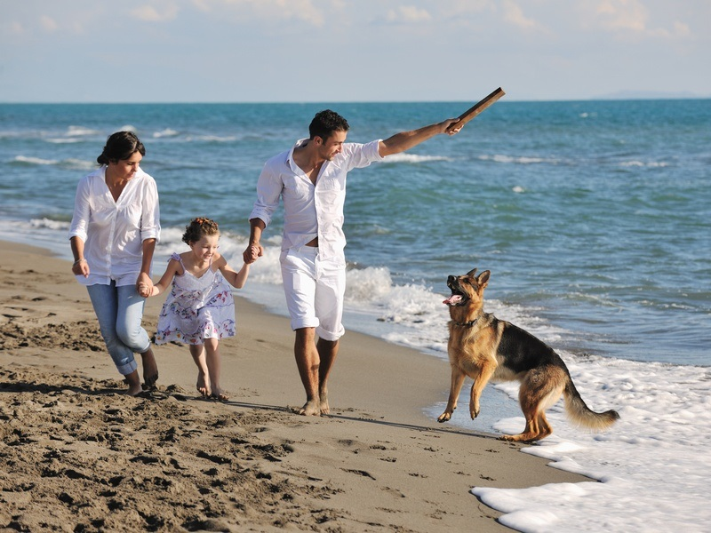 5 Must-Haves When Bringing Your Pet Along on Your Trip